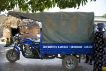 """Soutenir la filière """"lait local"""" en Afrique de l'Ouest"""