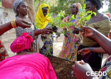 Au Sénégal : avec l'agriculture urbaine