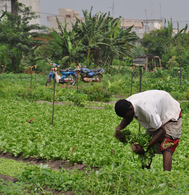 Afrique de l'Ouest : l'agriculture familiale peut nourrir les villes