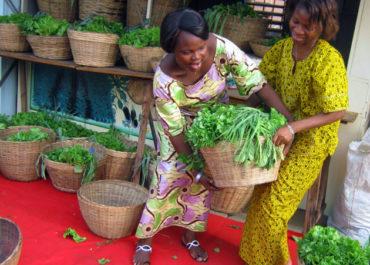 Au Bénin : des paniers bio en ville