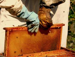 Essaimer l'apiculture au Bénin