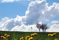 Le CFSI co-signe une tribune demandant une réorientation de la politique agricole française