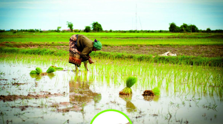 Le droit aux semences : un droit essentiel pour les paysans !