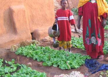 Mauritanie : les défis d'une production agricole locale