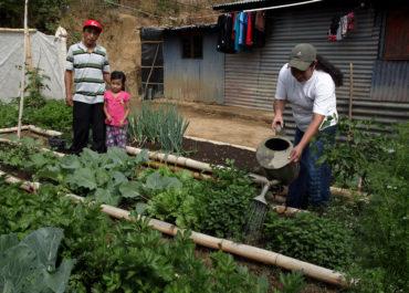 Des paniers paysans du Salvador au jardin solidaire de Montauban