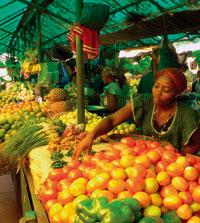 Mozambique : développer l'agriculture pour nourrir les villes