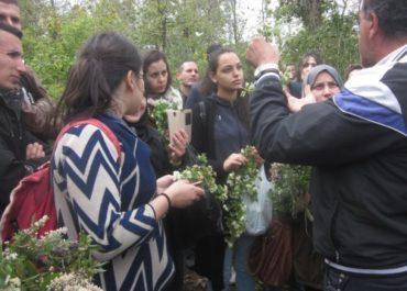 Algérie : Une pépinière pour retrouver le patrimoine ancestral curatif des plantes