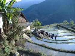 Au Vietnam