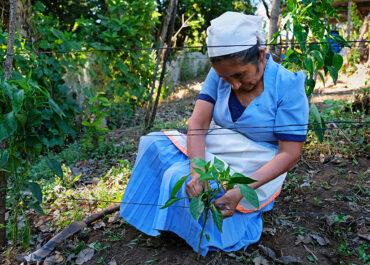 Au Salvador et au-delà, faire grandir les initiatives pour une agriculture et une alimentation durables et solidaires