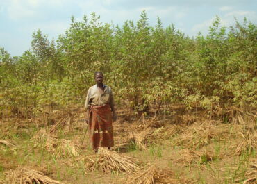 Au Congo Brazzaville, l'agroforesterie pour lutter contre le réchauffement climatique