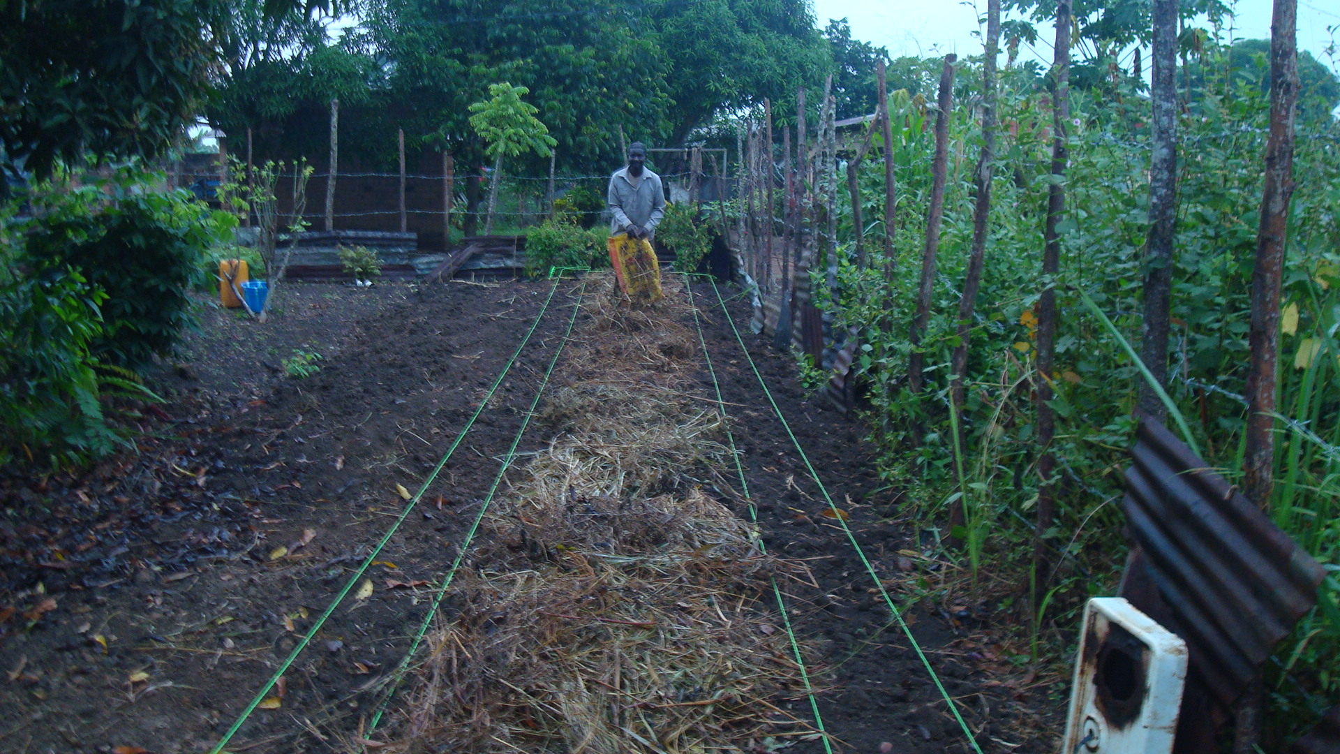 champs de plantation2 -plants arbres fruitiers - Nkayi 2021 - pcpacongo