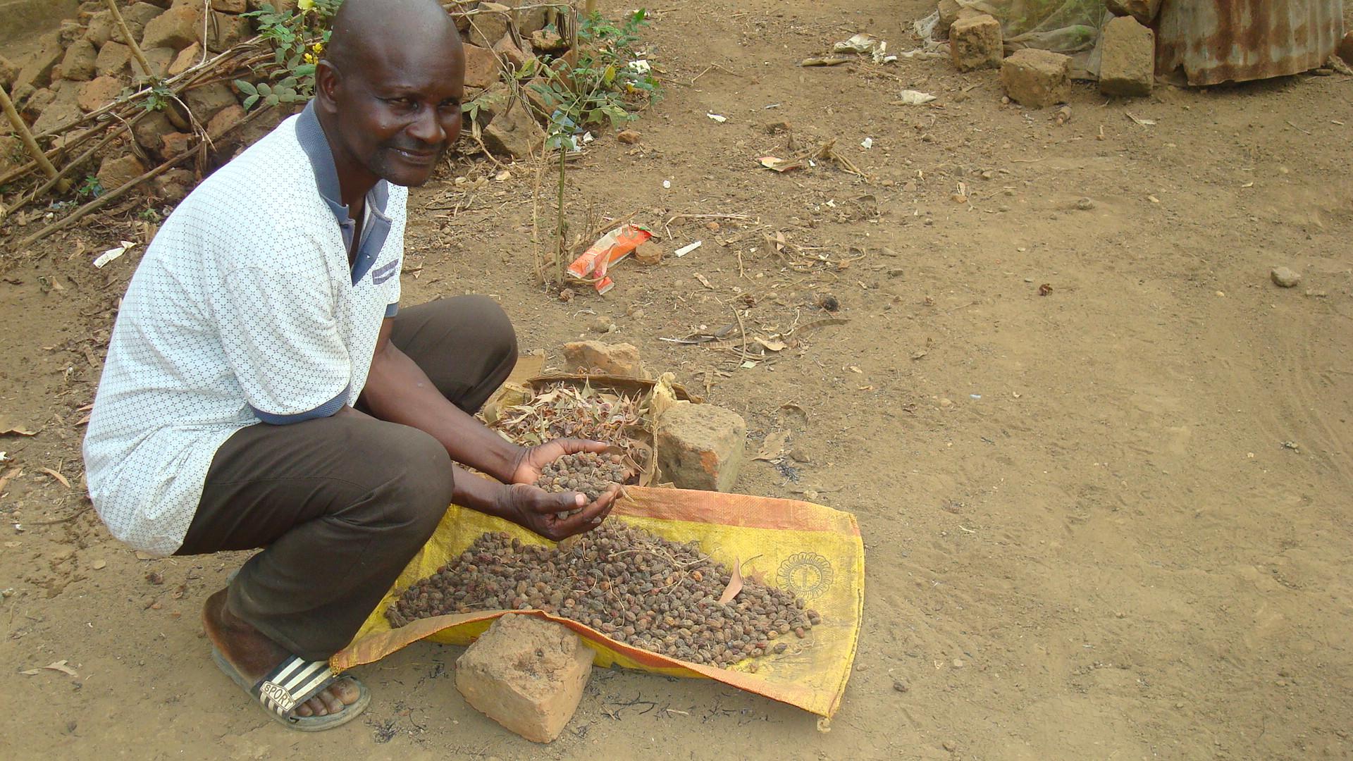 expérimentation de certaines cultures - Nkayi 2021, pcpacongo